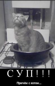 значение выражения суп с котом