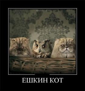 Фото Ешкин кот
