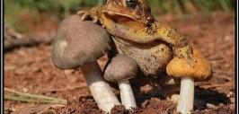 демотиватор жаба давит