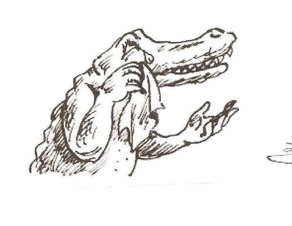 Значение выражения крокодиловы слёзы