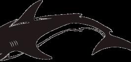 значение изображения акулы на машине