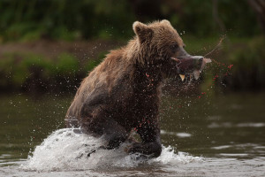 На ловца и зверь бежит, рыба плывет