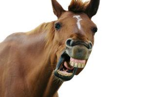 Конь, зубы...